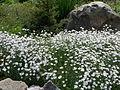 Ботанічний сад ДНУ 49.JPG