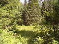 Где-то в лесу - panoramio (4).jpg