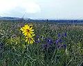 Дивногорье Травы Фото1.jpg