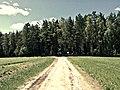 Дорога на кладбище - panoramio (1).jpg