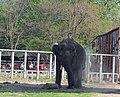 Киевский зоопарк (83).jpg
