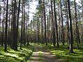 Лесная дорога meža ceļš - panoramio - Aleksandrs Timofejev… (16).jpg