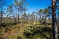 Начало болота - panoramio (2).jpg