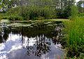 Одне з Шацьких озер 1.JPG