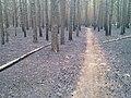 Подгоревший лес в парке Гагарина - panoramio.jpg