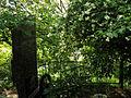 Прибузьке - Братська могила DSCF9114.JPG