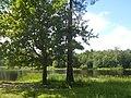 Приоратский парк, северный берег Филькиного озера.jpg
