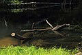 Река Илеть 18.jpg