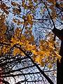 Самбірська осінь - panoramio.jpg