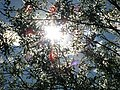 Солнышко в ивах - panoramio.jpg