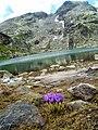 Страшното езеро - panoramio (5).jpg