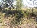Хрипуновский могильник. Следы бугровщиков (1).JPG