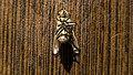 عکس از زوایای مگس مرده 03.jpg