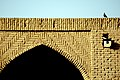 پرندگان کاروانسرای دیر گچین استان قم 15.jpg