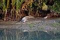 জিরিয়ে নিচ্ছে নদীপাড়ে.jpg