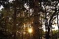 สวนชัชนาถรีสอร์ท - panoramio (1).jpg