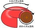 トカマク型トロイダル方向ポロイダル方向.JPG