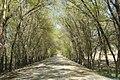 中国新疆昌吉回族自治州奇台县 China Xinjiang Qitai, China Xinjiang Uru - panoramio (10).jpg