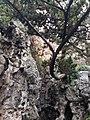 南京瞻园南假山与青松 - panoramio.jpg