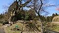 峰山陣屋跡のエノキ9.jpg