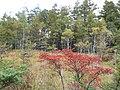 御泉水自然園 - panoramio (3).jpg