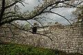 日本京都古蹟5.jpg