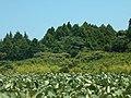 稲敷市の森と畑.jpg