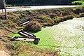 우포늪 (upo wetlands).jpg