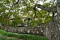 0-Chateau-Losse-02.jpg