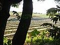 0126jfLandscapes Sunsets Fields Maronquillo San Rafael Bulacanfvf 12.JPG