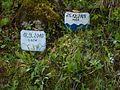 037 Hochwassermarken entlang der Soca (5759475324).jpg
