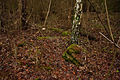 11-12-26-carinhall-by-RalfR-13.jpg