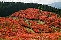 170514 Mt Yamatokatsuragi Gose Nara pref Japan01s3.jpg