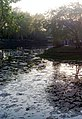 170520111771 Усадьба Расторгуева Л.И.- Харитонова, парк с прудом.jpg