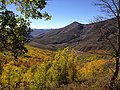 2014-10-04 13 52 38 View of Aspens during autumn leaf coloration from Charleston-Jarbidge Road (Elko County Route 748) in Copper Basin about 10.3 miles north of Charleston, Nevada.jpg