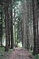 20150525.Schiefe Ebene Lehrpfad.-023.jpg