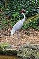 2016 Singapur, Jurong Bird Park (027).jpg