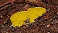 2017.07.05.-17-Springsee-Storkow (Mark)--Gelbe Lohbluete.jpg