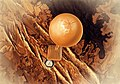 2020 09 150100 - visit Venus.jpg