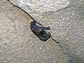 20 Bat in northwestern Collins Avenue 1 (8324779341).jpg