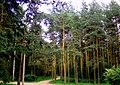 2992. St. Petersburg. Park Sosnovka.jpg