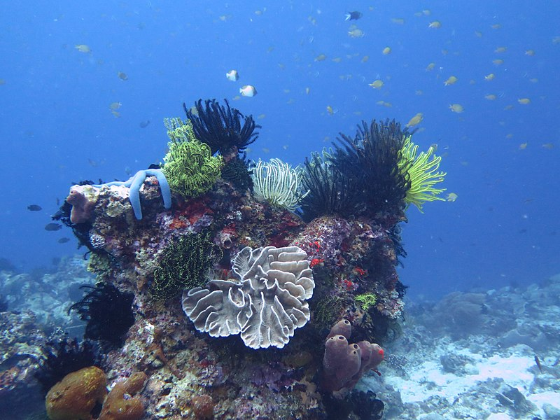 File:2Apo Island scuba diving.jpg