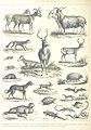 300 of 'Histoire illustrée de la Corse, contenant environ trois cents dessins représentant divers sujets de géographie et d'histoire naturelle, les costumes anciens et modernes, etc' (11064423725).jpg