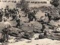 31st Division landing on Morotai.jpg