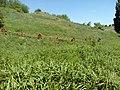 35-211-5004 Казавчинські скелі Лютинська 181.jpg