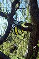 35 - Tree Bouncers, Cathy Davidson (4655839574).jpg
