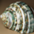 40 by 40 thumbnail of 'Green Sea Shell' (x4 Bicubic).png