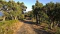 83230 Bormes-les-Mimosas, France - panoramio (127).jpg
