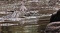 9675 Serengeti N crocs JF.jpg