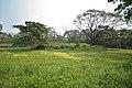 AJC Bose Indian Botanic Garden - Howrah 2018-04-01 2348.JPG